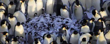 Penguins-Huddle-Generative-Container