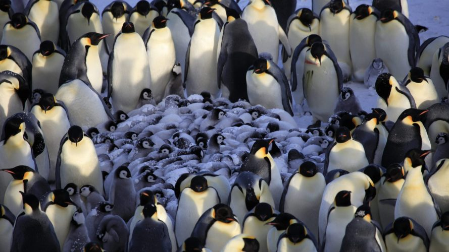 Penguins-Huddle-Generative-Container